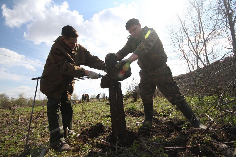 Волонтёры Западного рубежа во время благоустройства смешанного захоронения Первой мировой войны у деревни Интока Поставского района-11