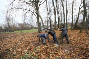 Волонтёры за благоустройством немецкого захоронения Первой мировой войны в деревне Дворчаны Поставского района-12