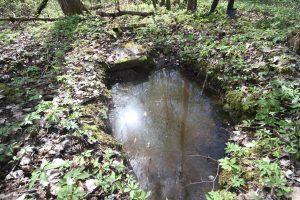 Раскопанная могила на кладбище Первой мировой войны у деревни Можейки Поставского района-1