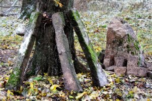 Немецкое кладбище Первой мировой войны около деревни Соловьи Поставского района-4