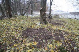 Немецкое кладбище Первой мировой войны около деревни Соловьи Поставского района-1